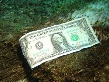 Free Dollar Bill On Submerged Log. Royalty Free Stock Photo - 544505
