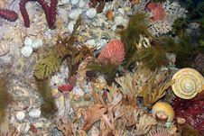 Free Underwater Habitat Stock Images - 545564