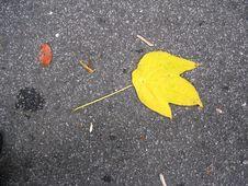 Free Yellow Leaf Royalty Free Stock Image - 545606