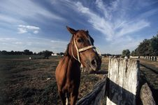 Free Horse Stock Photo - 545940