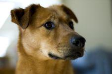 Free Dog S Head Stock Photo - 546050