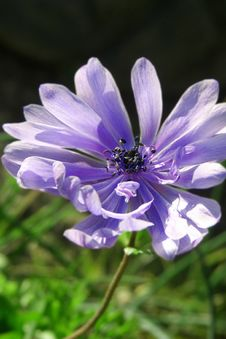 Free Purple Flower Swaying In Wind Stock Images - 546364