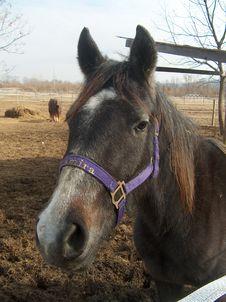 Free Horse Posing Royalty Free Stock Image - 546966