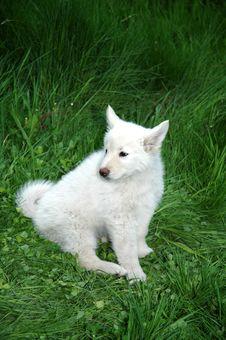 Free White Dog Stock Photography - 547212