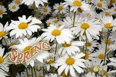 Free Dandelion Flowers Stock Image - 547221