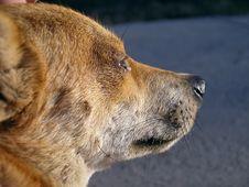 Free Crying Dog Stock Photos - 547443