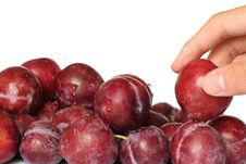 Free Picking Plums Stock Images - 547764
