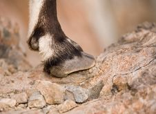 Free Hoof Stock Photo - 547790