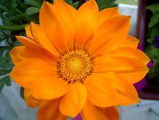 Free Daisy Flower Stock Photo - 548580