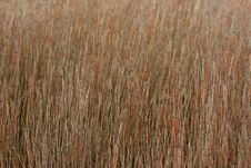 Free Marshland Grasses Stock Images - 548624
