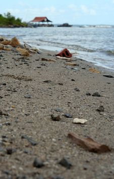 Free Sea Shore. Royalty Free Stock Image - 548656