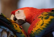 Free Macaw Royalty Free Stock Images - 549249