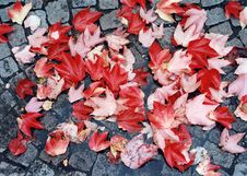 Free Red Autumn Leaves Stock Photos - 549263