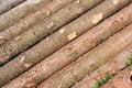 Free Log Wood Stock Image - 5406451