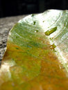Free Leaf With Droplets Royalty Free Stock Photos - 5409568