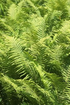 Free Fern Forrest Stock Images - 5400334