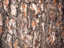 Free Pine Tree Cortex Stock Photo - 5401280