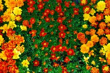 Free Bed Of Bright Flowers Stock Photos - 5401883