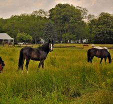 Free Horse Royalty Free Stock Photos - 5403018