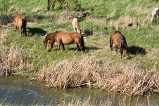 Free Horses By Creek Stock Photos - 5403343
