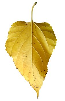 Free Leaf Stock Photography - 5403612