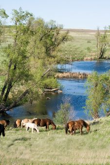 Free Horses By Stream Royalty Free Stock Image - 5403656