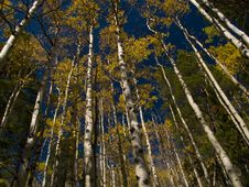 Free St. Vrain Mountain Autumn Stock Photos - 5404133
