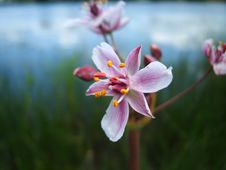 Free Wild Flowers Stock Images - 5404384