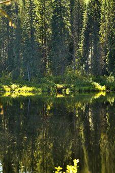 Free Northern Jungle Stock Image - 5404521