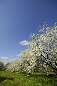 Free Spring Stock Photos - 5405253