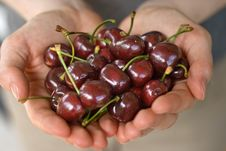 Free Hands Full Of Cherry Royalty Free Stock Photo - 5405785