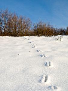 Free Animal Tracks Royalty Free Stock Photo - 5406225
