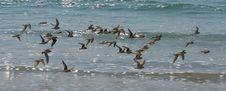 Free Birds... Stock Photography - 5406282
