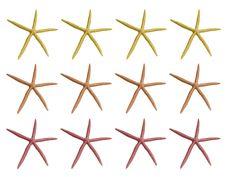 Soft Color Sea Shells Royalty Free Stock Image