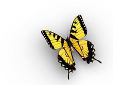 Free Butterfly Royalty Free Stock Images - 5406939
