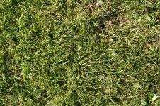 Free Green Grass Royalty Free Stock Image - 5407266