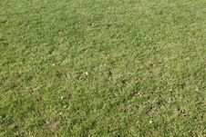 Free Green Grass Royalty Free Stock Images - 5407479