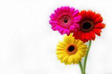 Free Flowers Stock Image - 5408601