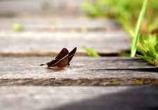 Free Butterfly In Wooden Pathway Stock Photography - 5408602