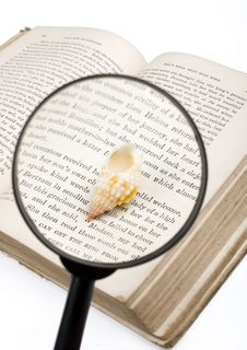 Free Magnifier And Seashell Royalty Free Stock Photos - 5408768