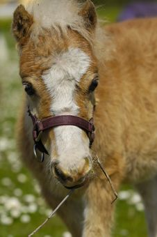 Free Sweet Young Horse Foal Stock Image - 5408861