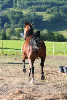 Free Race Horse Stock Photo - 5409530