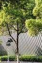 Free Tree Royalty Free Stock Photography - 54006747