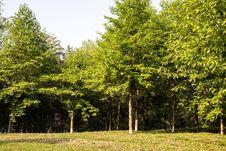Free Woods Stock Image - 54008111