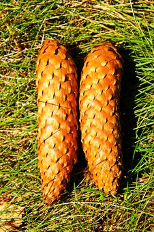 Cones Stock Photography