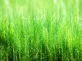 Free Soft-focus Grass Stock Image - 5414611