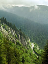 Free Forest On Mountain Stock Images - 5418054