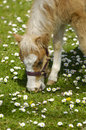 Free Young Horse Stock Photo - 5418110