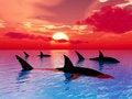Free Sharks Royalty Free Stock Image - 5418166