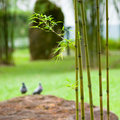 Free Bamboo In Garden Stock Photos - 5418583